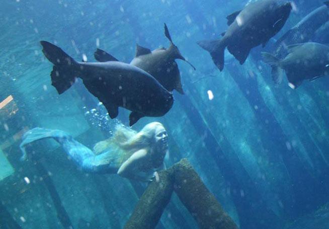 aquario-mirella-ferraz-sereia-03