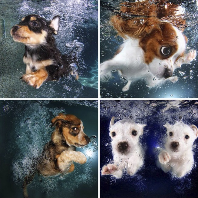 sethcasteel_underwaterpuppies