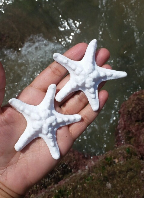 Estrelas do mar de biscuit sereismo natural tati