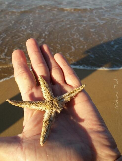 Estrela do mar frente sereismo naturaltati